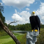 From a distance you had to look twice to make sure that the Eagle wasn't real. This LEGO sculpture was assembled with over 40,000 LEGO pieces...wow!