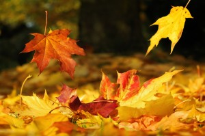 two leaves falling down on a meadow covered with colored atumn leaves