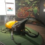 An over-sized beetle...you can play on it too!