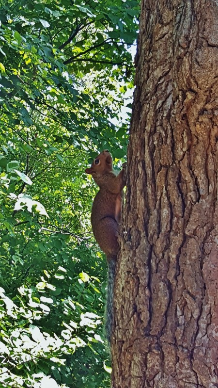 Our native Brown Squirrels greeted us and graciously welcomed us into their homes...they were exceptional hosts!