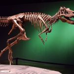 The velociraptor is posed to show us how they would have ran...like a chicken!